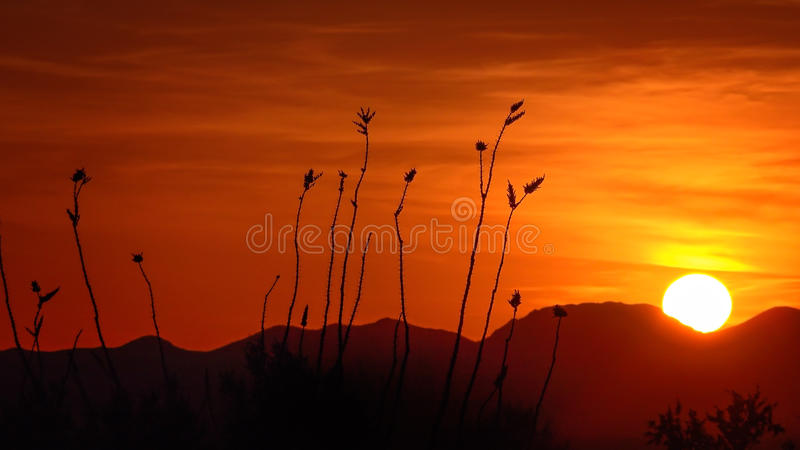 Puesta del sol del parque nacional de Saguaro foto de archivo