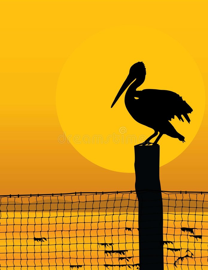 Puesta del sol del pelícano libre illustration