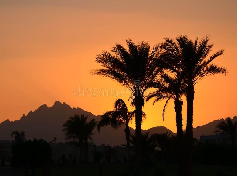 Puesta del sol del reloj de las palmas en Egipto fotografía de archivo