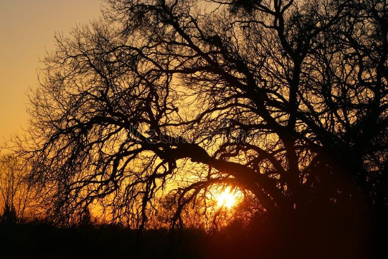 Puesta del sol del roble imágenes de archivo libres de regalías