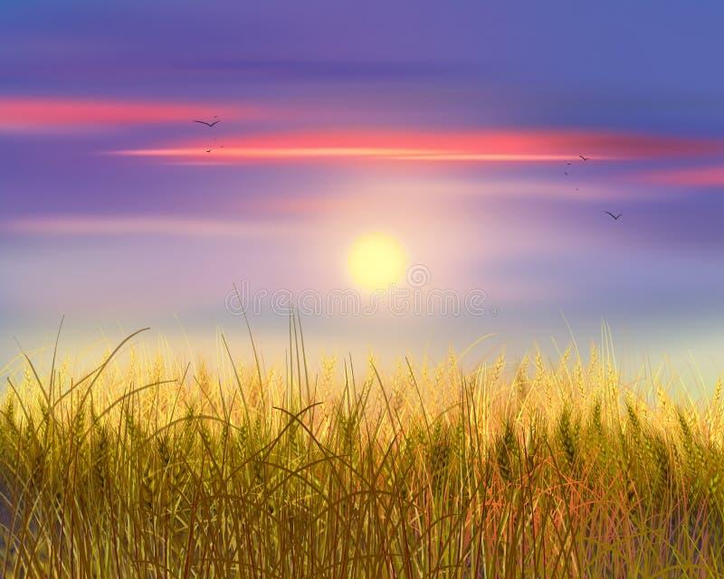 Puesta del sol del trigo y del cielo imágenes de archivo libres de regalías