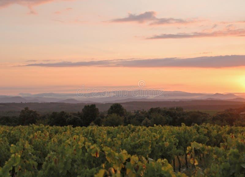 Puesta del sol del viñedo fotografía de archivo