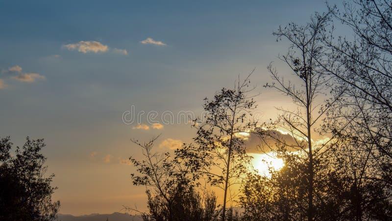 Puesta del sol detrás del arbusto nativo típico fotografía de archivo libre de regalías