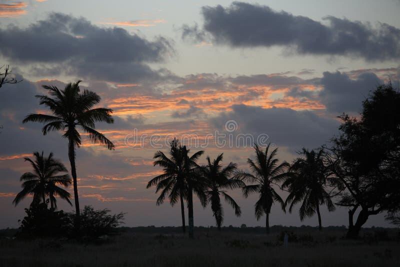 Puesta del sol detrás de las palmeras fotos de archivo