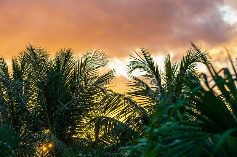 Puesta del sol detrás de las palmeras, Guadalupe imagen de archivo libre de regalías