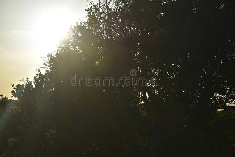 Puesta del sol detrás de un árbol foto de archivo libre de regalías