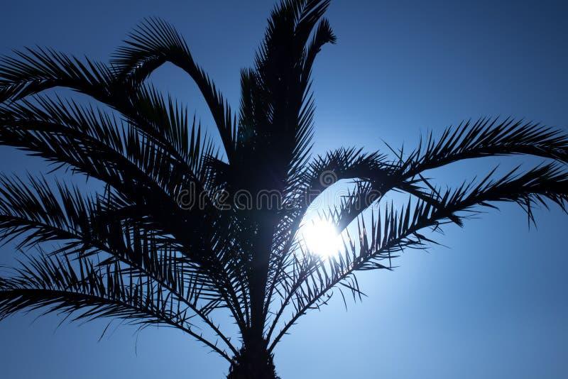 Puesta del sol detrás del cielo de la silueta de la palma fotos de archivo libres de regalías