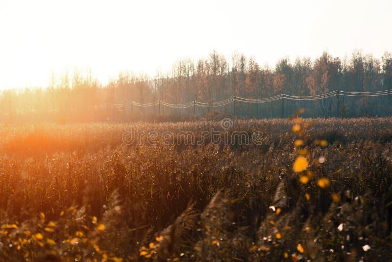 Puesta del sol e hierbas salvajes Luz del sol a través del follaje rojo Hojas amarillas, rojas, verdes en la luz del sol imagenes de archivo