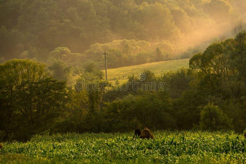Download Puesta del sol en Apuseni foto de archivo. Imagen de paisaje - 41903538