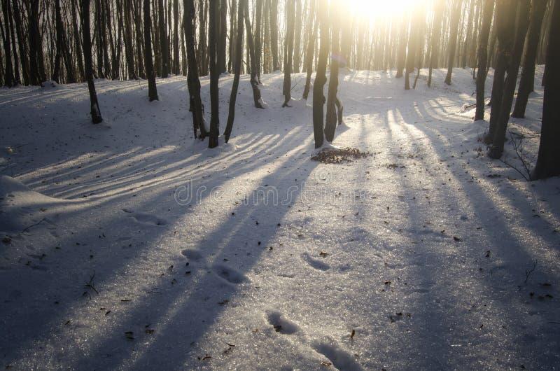 Puesta del sol en bosque congelado en invierno fotos de archivo libres de regalías