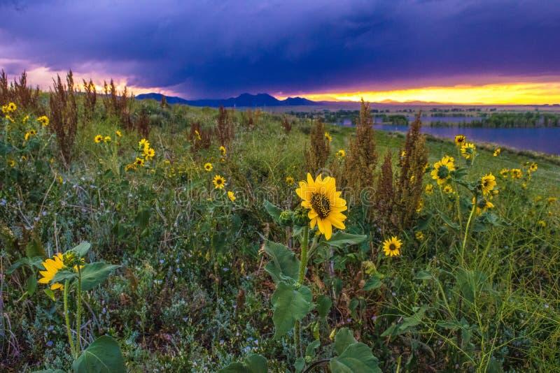 Puesta del sol en Boulder, Colorado imágenes de archivo libres de regalías