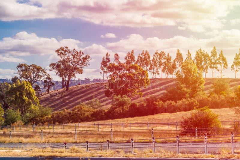 Puesta del sol en campo australiano Sombras largas de árboles y de la llamarada del sol imagen de archivo