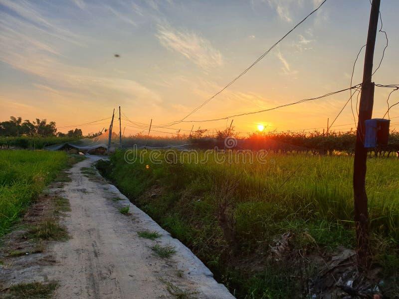 Puesta del sol en campo verde foto de archivo