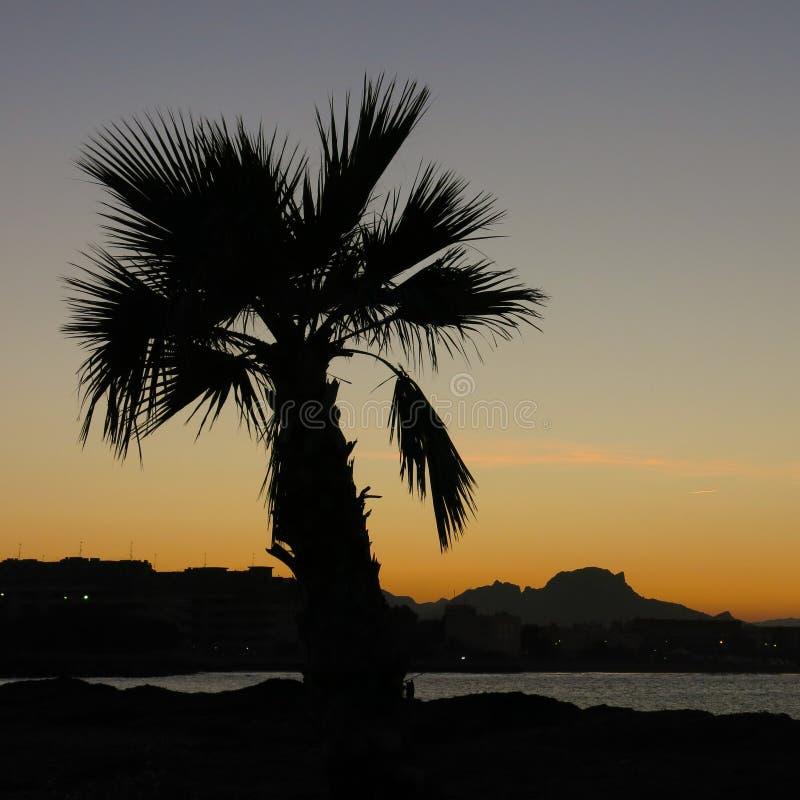 Puesta del sol en Denia, Espa?a Esquemas de una palma enana imagenes de archivo