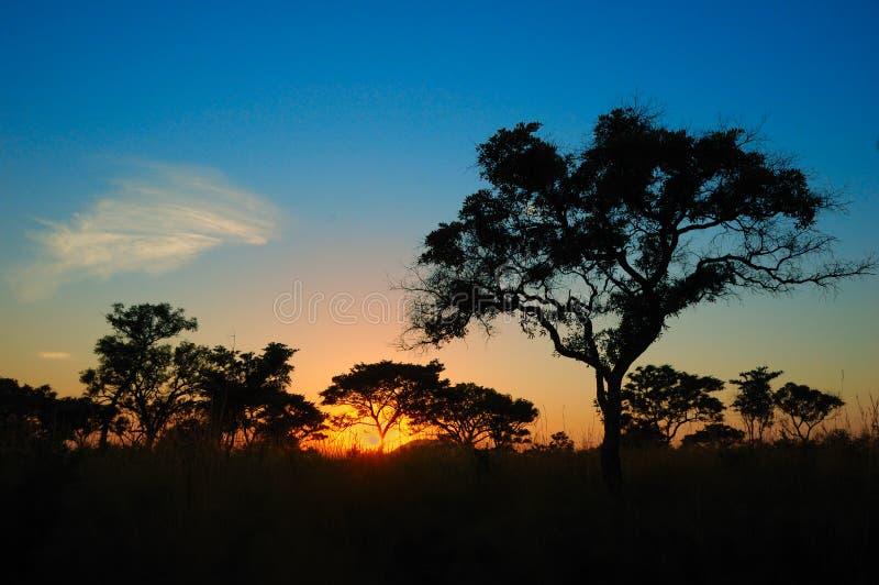 Puesta del sol en el arbusto africano (Suráfrica) fotografía de archivo