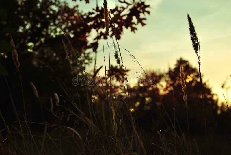 Puesta del sol en el bosque imagenes de archivo