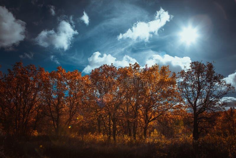 Puesta del sol en el bosque imagen de archivo libre de regalías