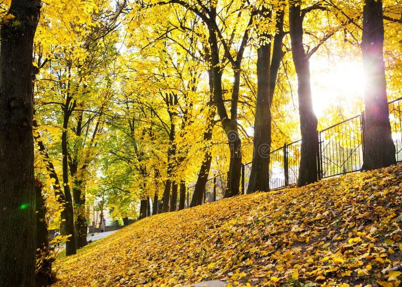Puesta del sol en el bosque del otoño foto de archivo libre de regalías