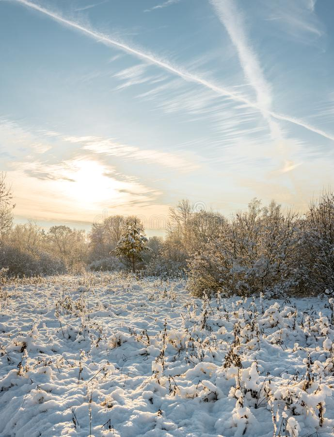 puesta del sol en el bosque del invierno/los abetos Nevado en bosque del invierno en imagen de archivo