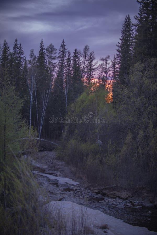 Puesta del sol en el bosque en la primavera imagenes de archivo