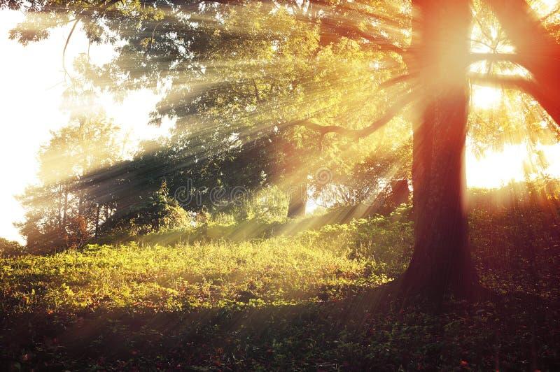 Puesta del sol en el bosque - paisaje colorido del otoño fotos de archivo