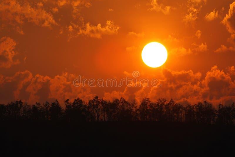 Puesta del sol en el bosque para el fondo imagenes de archivo