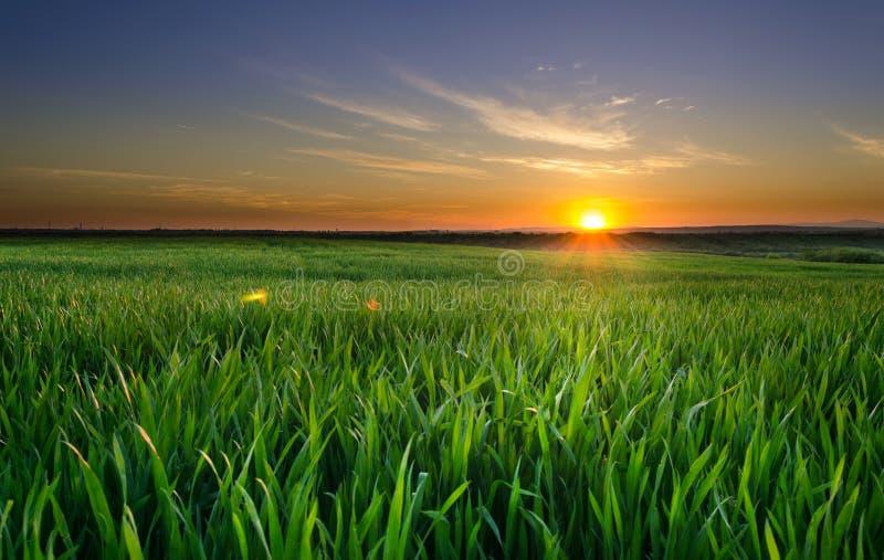 Puesta del sol en el campo de trigo fotos de archivo