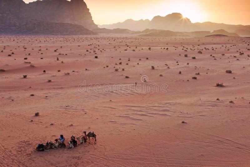 Puesta del sol en el desierto de Wadi Rum, Jordania, con los beduinos y los camellos locales en primero plano foto de archivo libre de regalías