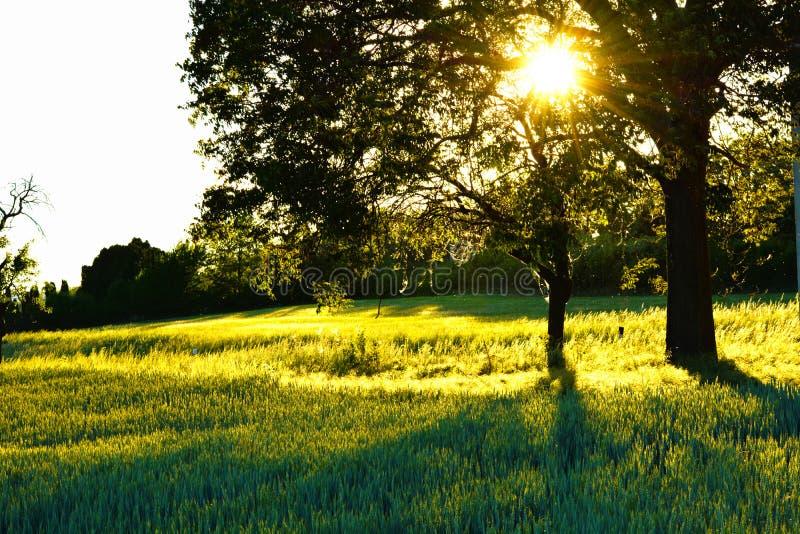 Puesta del sol en el fondo de un árbol foto de archivo libre de regalías