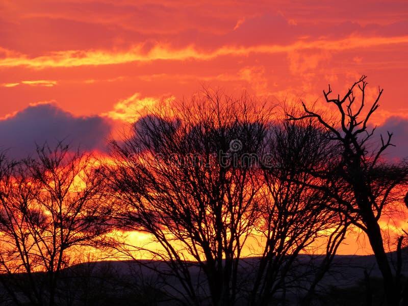 Puesta del sol en el medio de Serengeti fotografía de archivo