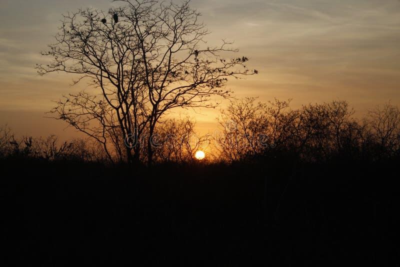 Puesta del sol en el país abierto foto de archivo libre de regalías