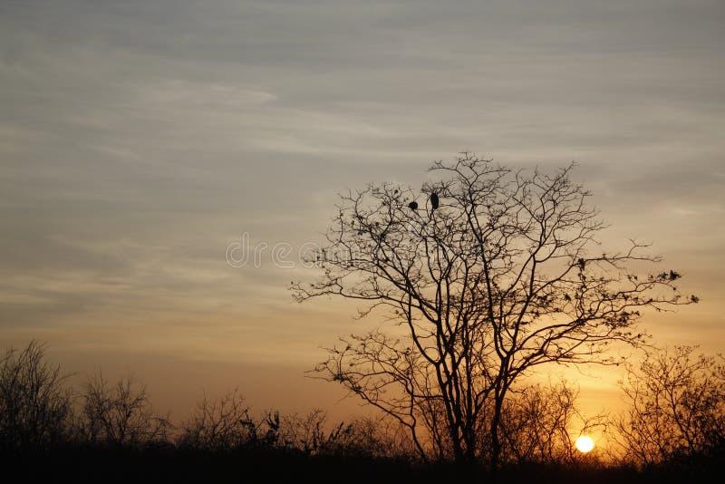 Puesta del sol en el país abierto fotos de archivo libres de regalías