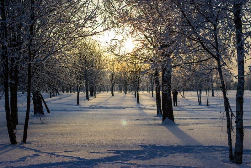 Puesta del sol en el parque del invierno. fotos de archivo libres de regalías