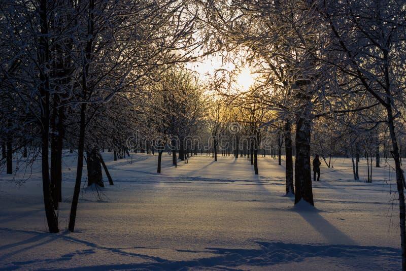 Puesta del sol en el parque del invierno. fotografía de archivo