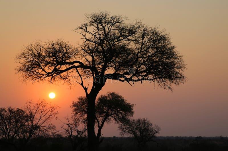 Puesta del sol en el parque nacional de Kruger fotos de archivo libres de regalías