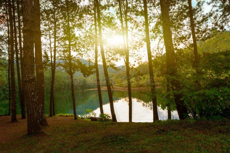 Puesta del sol en el pino Forest Park, Pang Ung Mae Hong Son de Pang Ung, tailandés foto de archivo libre de regalías