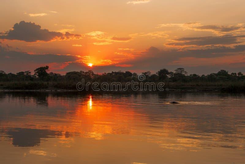Puesta del sol en el río de Okavango, Namibia fotos de archivo libres de regalías