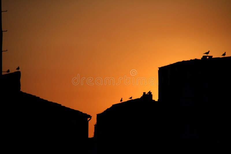 Puesta del sol en Estambul con los pájaros fotos de archivo libres de regalías