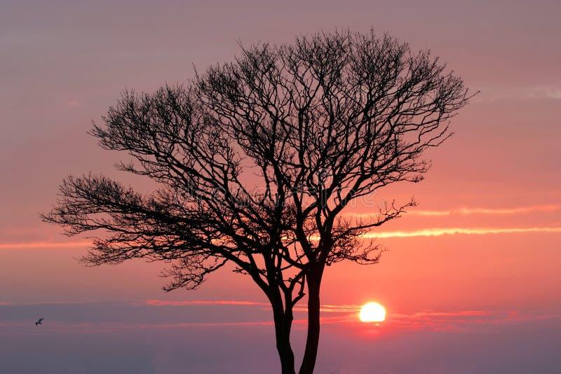 Puesta del sol en invierno foto de archivo libre de regalías