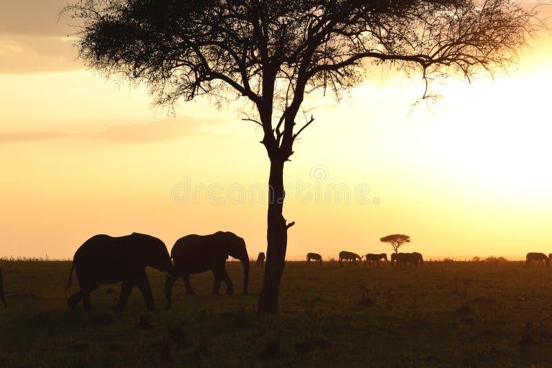 Puesta del sol en Kenia fotografía de archivo