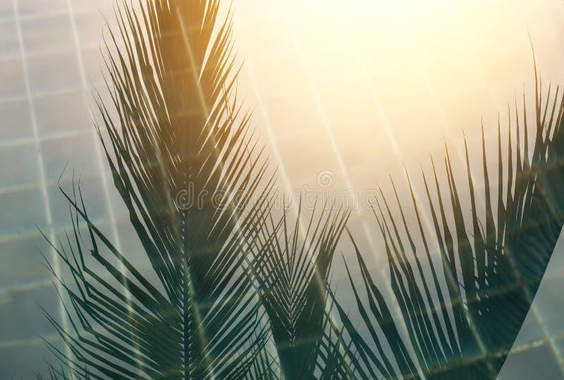 Puesta del sol en la piscina, sombra del coco que refleja en superficie del agua de la natación con la luz de la puesta del sol fotos de archivo