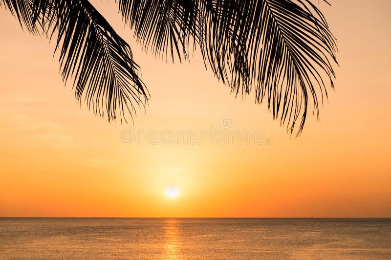 Puesta del sol en la playa a través de la silueta de la palmera imagen de archivo