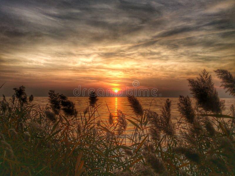 Puesta del sol en las cañas del lago imagen de archivo