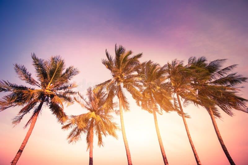 Puesta del sol en las zonas tropicales con las palmeras fotografía de archivo libre de regalías