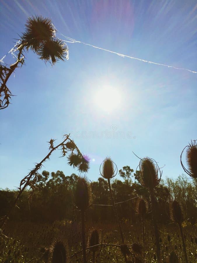 Puesta del sol en los campos foto de archivo libre de regalías