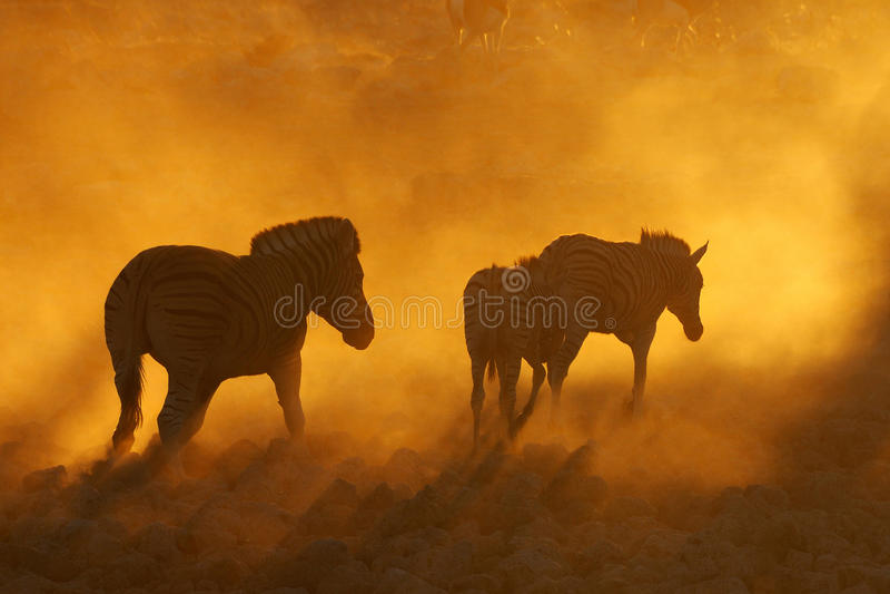 Puesta del sol en Okaukeujo, Namibia fotos de archivo libres de regalías