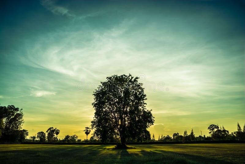 Puesta del sol en parque imagen de archivo