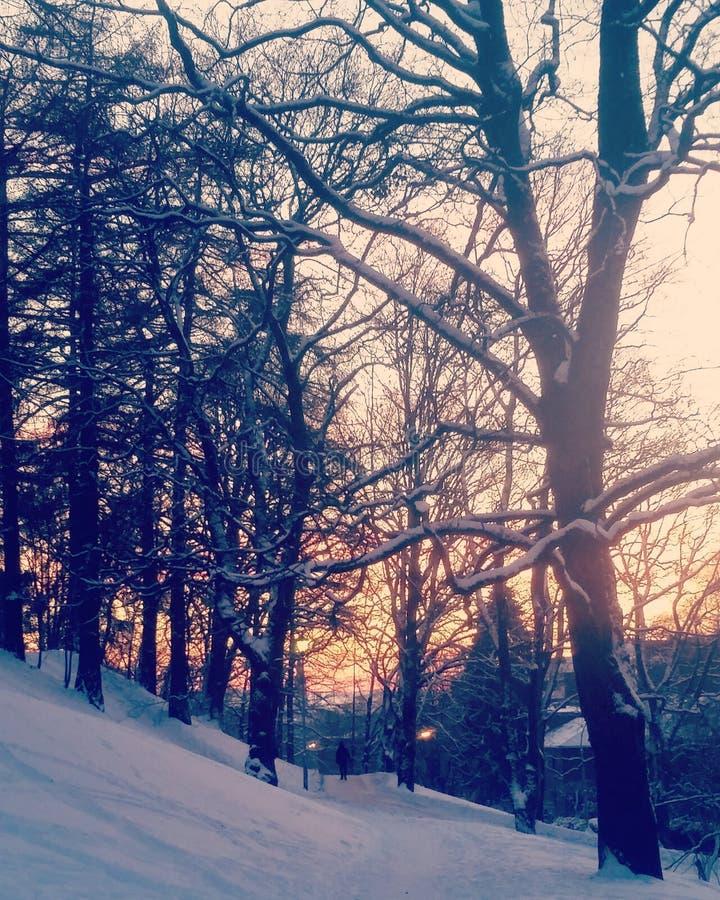 Puesta del sol en parque del St Hanshaugen fotos de archivo libres de regalías