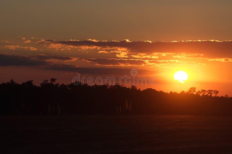 Puesta del sol en primero plano de la hierba foto de archivo libre de regalías