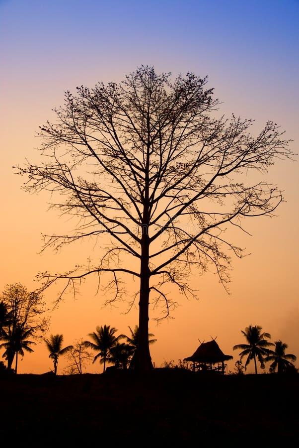 Puesta del sol en selva foto de archivo